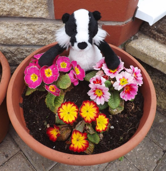 Flower Badger