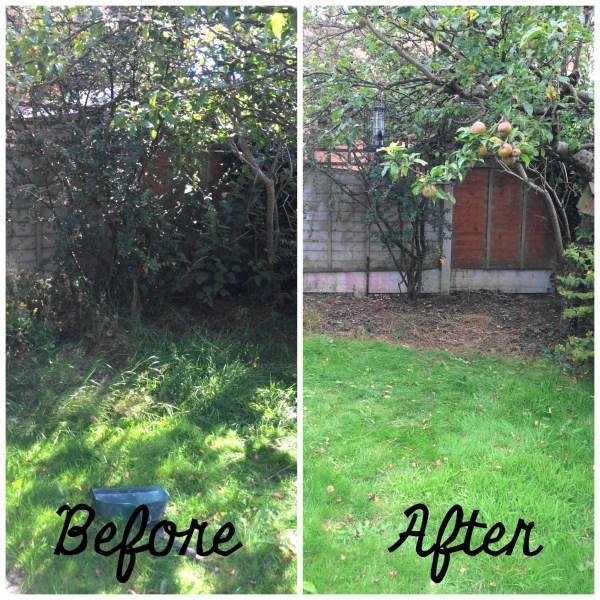 Garden Progress 1