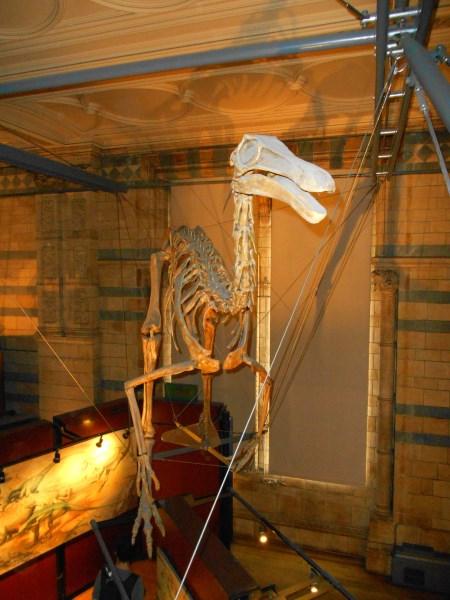 Natural History Museum 10