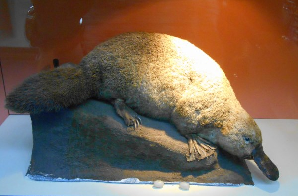 Natural History Museum 6
